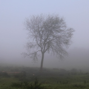 07-tree-in-the-mist-1000
