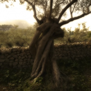 Do Olive Trees dream of Oak Trees?
