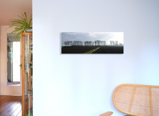 Autumn in the Beemster Polder (100 x 35 cm) glued on Dibond