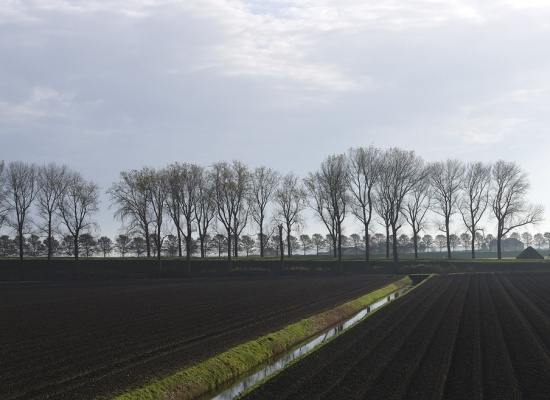 Autumn in the Beemster Polder (60 x 21 cm)